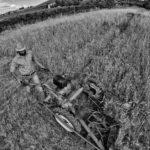 harvest claudio dell'osa ph